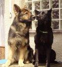 GERRO a CHANNY doma v Dřísech