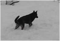 FRONY z Dvořákova sadu, 10.ledna 2010