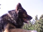 GERRO z Dvořákova sadu, ve službě, 7.května 2011