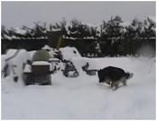 GERRO z Dvořákova sadu, 17.ledna 2010, Dřísy