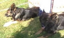 GERRO a JASSAN, 23.srpna 2012, oslava narozenin
