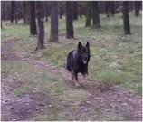 JASSAN na procházce v lese, 16.srpna 2011