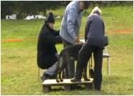 LADA z Dvořákova sadu, bonitace, Vratislavice nad Nisou, 2009, posouzení vzhledu