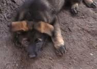 Štěňátka LADY z Dvořákova sadu, 9.července 2011