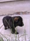 LADUNČATA, štěňátka LADY z Dvořákova sadu, 11.června 2011