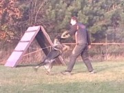 LARRYS a LESSIE z Dvořákova sadu, výcviková neděle, 13.listopadu 2011