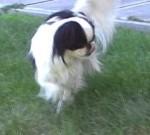 Naši malí psi, 21.července 2013