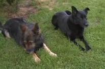 Naši psi, 13.června 2012