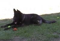 """Naši psi """"z Dvořákova sadu"""", 19.srpna 2012"""