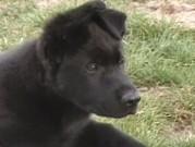 Naši psi, 20.března 2014