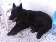 Naši psi z Dvořákova sadu, 21.července 2013