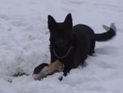 Naši psi, 24.února 2013