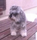 Naši psi, 5.října 2014