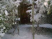 NIKKY z Dvořákova sadu, 12.prosince 2010