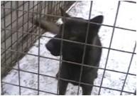 ORRY z Dvořákova sadu ve službě u vězeňské správy ČR, 3.ledna 2010