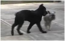 PORTY a naši psi, 30.března 2010