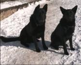 RONNY z Dvořákova sadu a její kámoš RONY, 3.února 2011