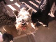 Naši psi, 26.června 2012