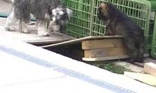 Štěňátka LADY z Dvořákova sadu a naši psi, 14.června 2011