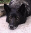 Naši psi, 1.srpna 2011