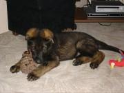 SANNY z Dvořákova sadu v novém domově, 9.července 2011