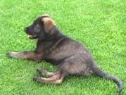 SANNY z Dvořákova sadu v novém domově, 10.července 2011