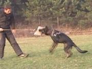 SANNY z Dvořákova sadu, výcviková neděle, 13.listopadu 2011