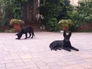 SONJA a SYLVIA z Dvořákova sadu, 8.srpna 2011