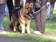 Výstava psů, Kolín, 16.dubna 2011
